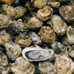 Environmentalists, farmers disagree on next steps as oyster population thrives