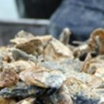 Public Notice: Multiple Oyster Harvest Area Openings and Closures