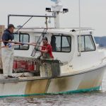 Barefootin: State Reports Historic Oyster Spat Sets in Parts of Chesapeake