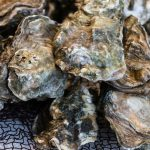 Good Outlook Adds Extra Day for Oysters