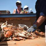 44th Annual J. Millard Tawes Crab & Clam Bake